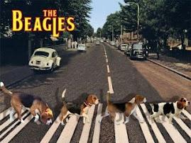 Cãotores