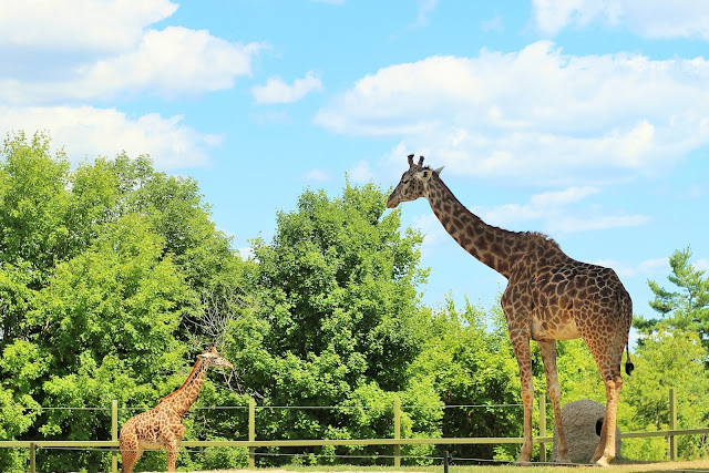 Best Attractions In Toronto | Summer Edition: Toronto Zoo