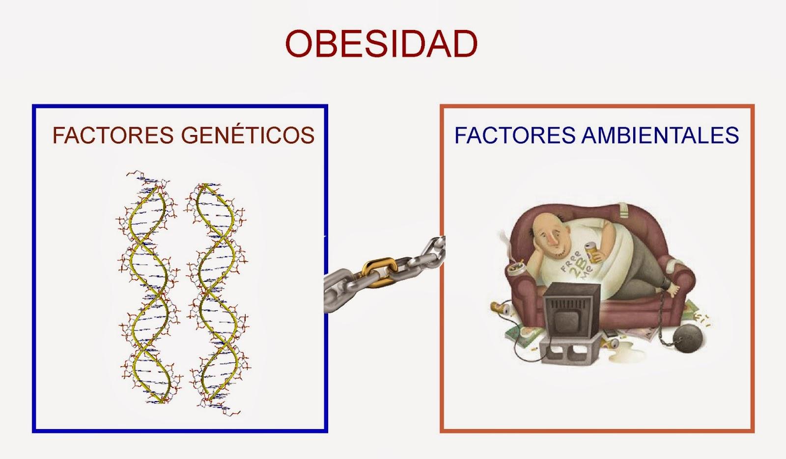 Factores genéticos y ambientales de la obesidad