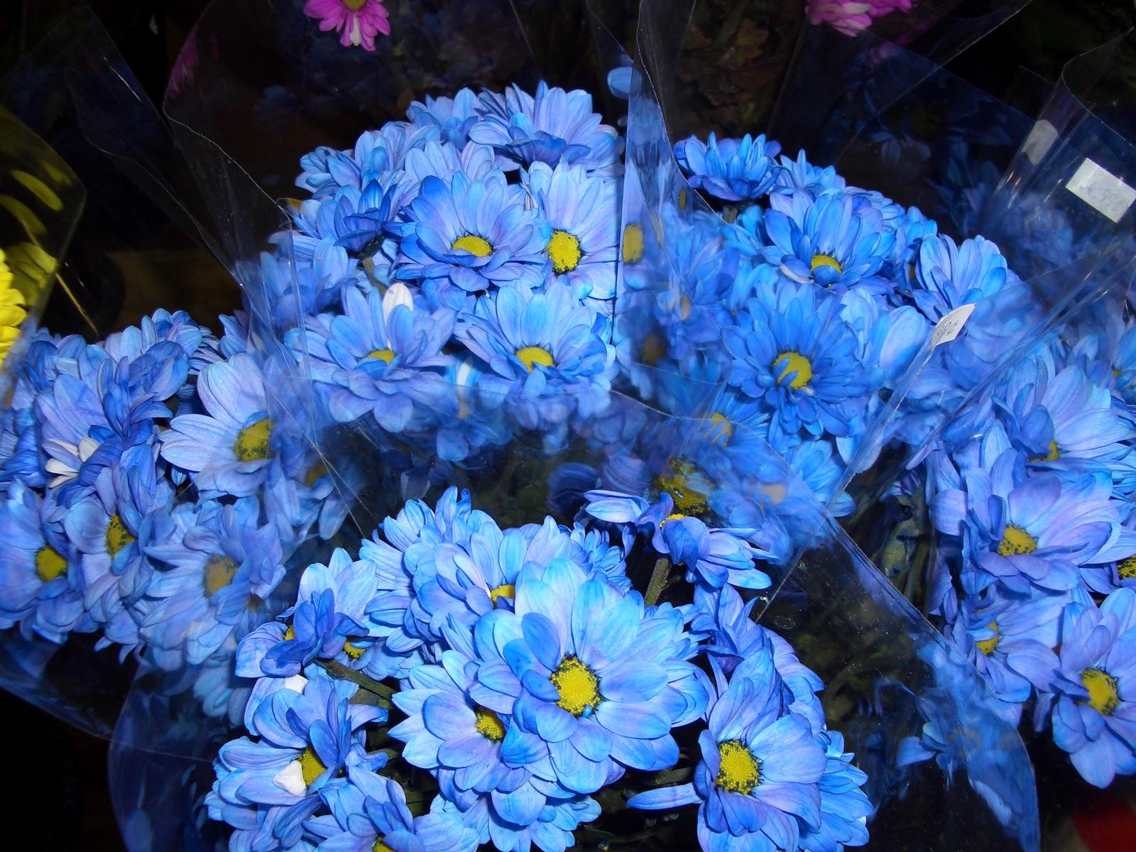 Синие цветы с названиями - Фото цветов 86