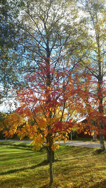 Baggböle autumn leaves
