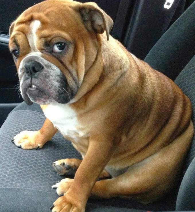 10 Most Common Medical Conditions That Send Dogs to the Vet