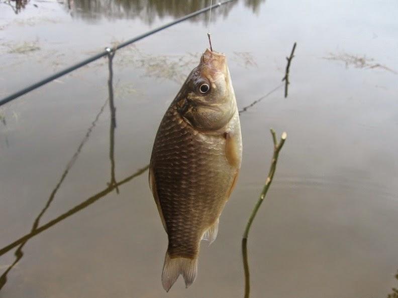 рыбалка в тамбовской области где ловится карась