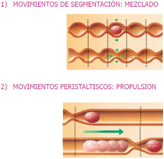 peristaltismo intestinal