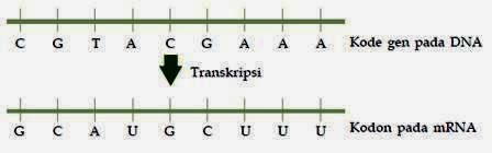 Remaja cerdas sintetis protein ccuart Images