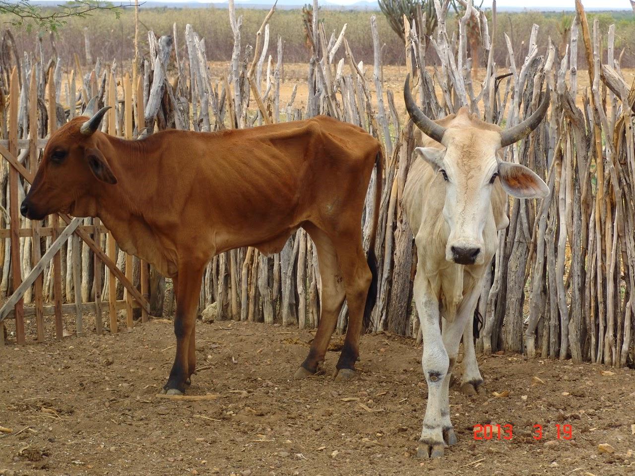 Animais na época da seca