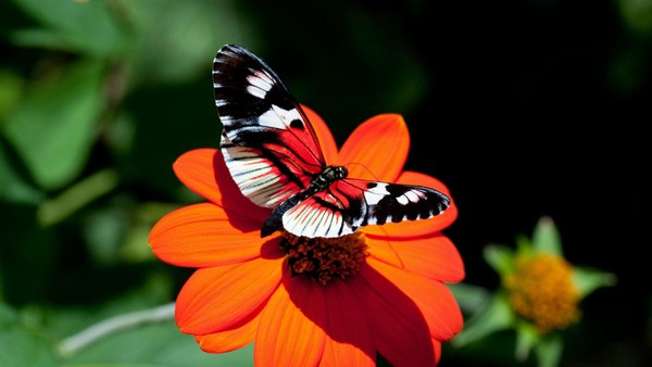 Fantastic Butterfly HD Wallpapers Cool Desktop Photos Full