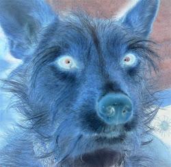 Vorsicht ! Vampir-Hund