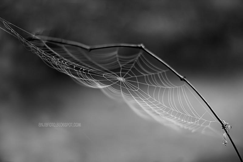 pajęczyna, spiderweb