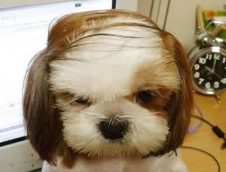 gaya rambut haiwan yang lucu