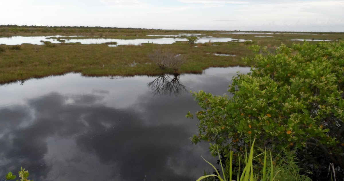 Mosquito lagoon indian river fishing salt marsh sea trout for How much is a saltwater fishing license in florida