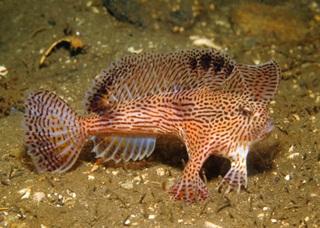 7 Ikan Teraneh Di Dunia