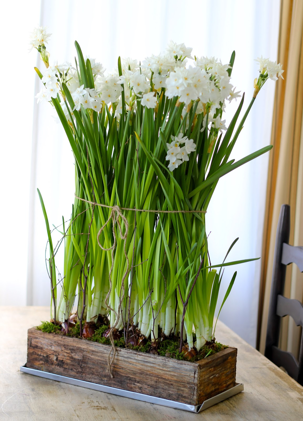 Jenny steffens hobick january freshen up paperwhites planting box as im in the process of de holidayizing my house im moving the dark and cozies out and all of my light and fresh in im replacing my woodland china mightylinksfo