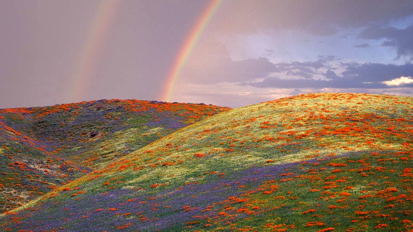 Poppies and lupine in Los Angeles County, California (© Corbis/age fotostock) 102