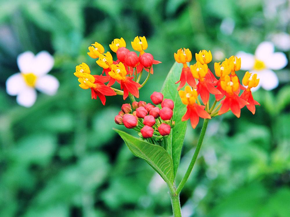 Flores silvestres muy cerca de mi jardín