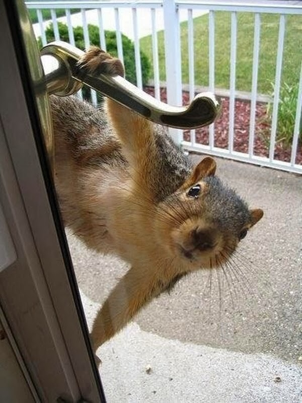 Funny animals of the week - 17 January 2014 (40 pics), squirrel hanging on door handle