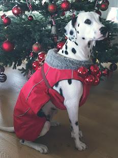Weihnachts-Hundiiii
