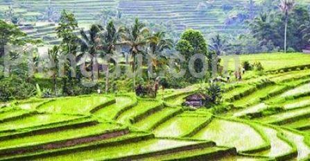 Pemanfaatan lahan pertanian di daerah perbukitan dengan cara terasering.