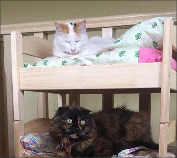 tempat tidur kucing ala jepang wisbenbae