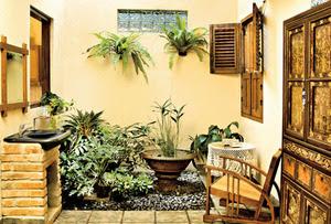 tanaman yang cocok untuk di rumah