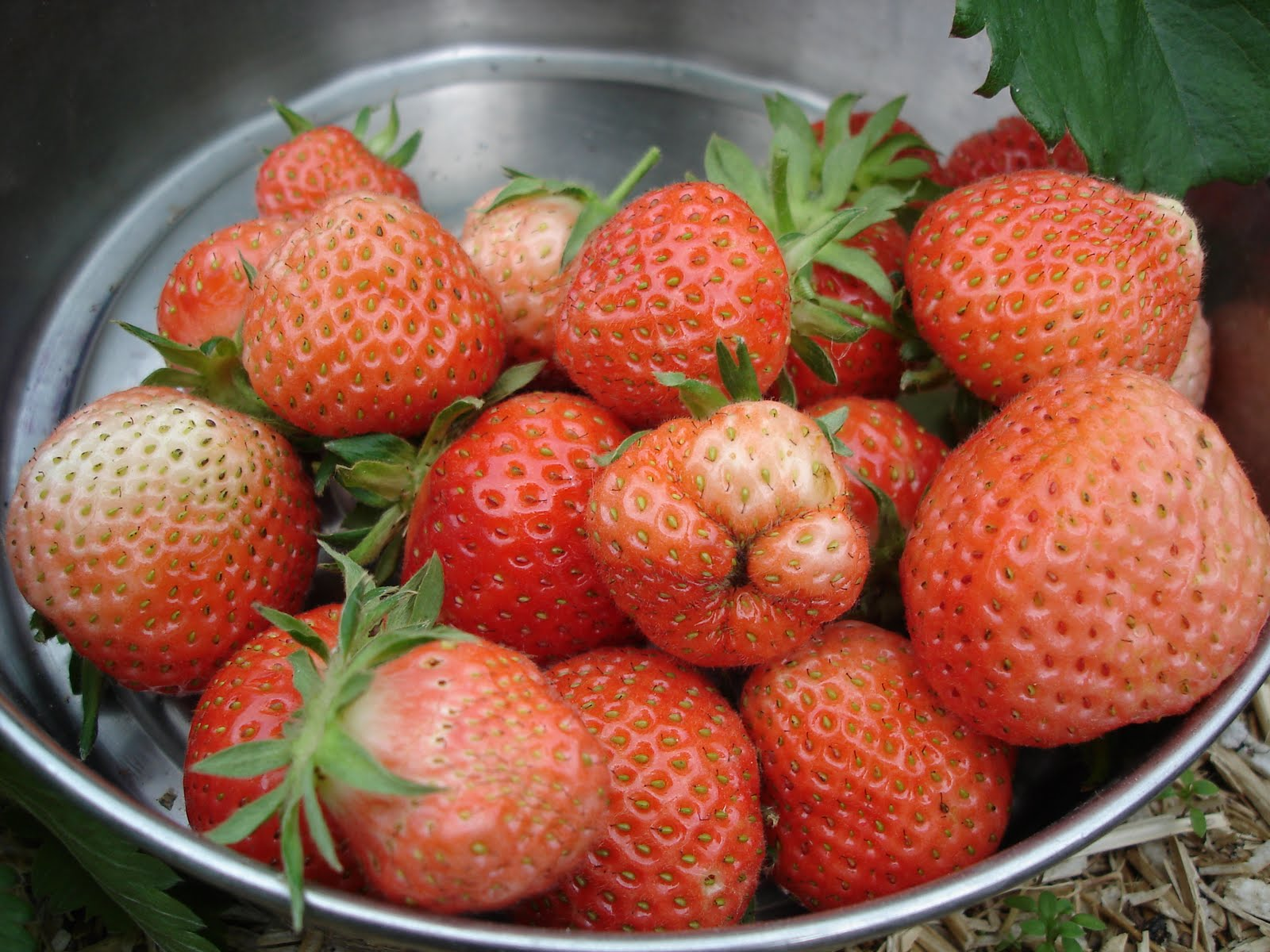 how to get bigger strawberries