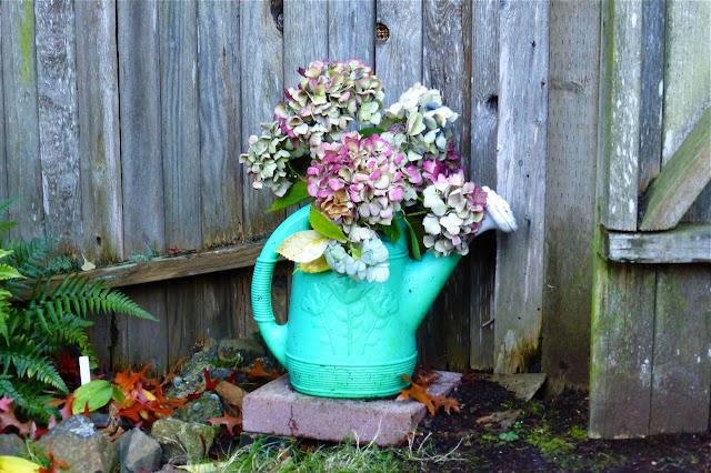 Hydrangea, hydrangea, hydrangea flowers