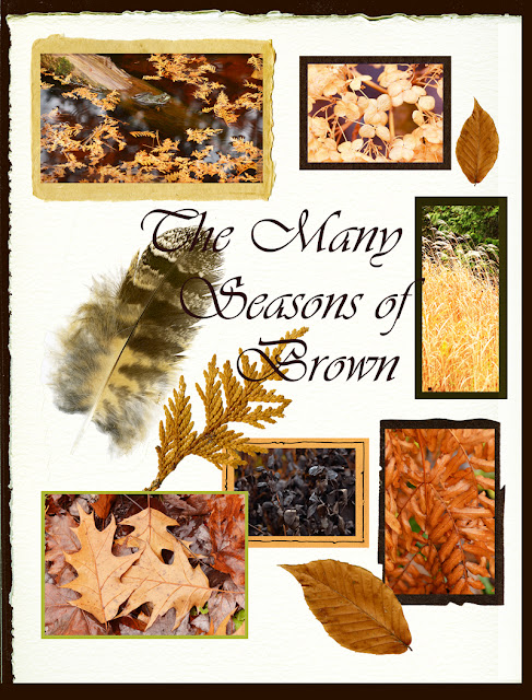 brown tones of autumn collage