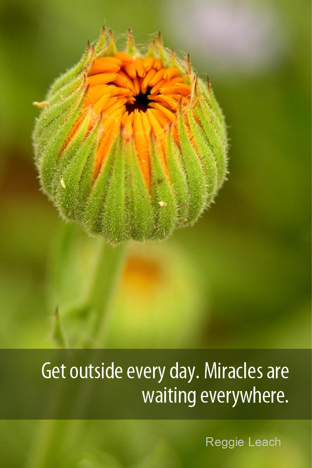 visual quote - image quotation for AWARENESS - Get outside every day. Miracles are waiting everywhere. - Reggie Leach