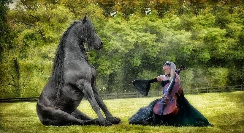 fotos-de-caballos-negros-de-cuerpo-entero
