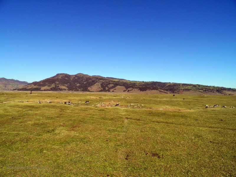 Gaysay grasslands in the Bale Mountains.