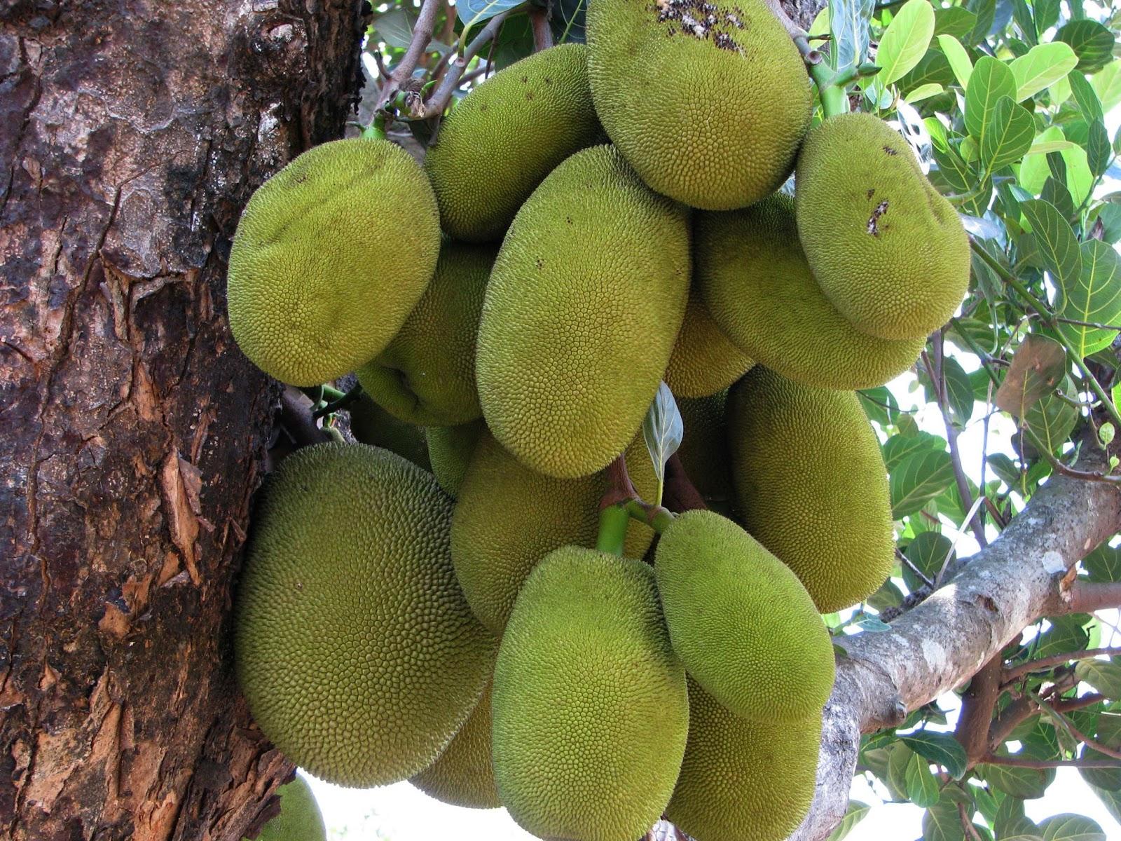 how to make pineapple jam in malayalam