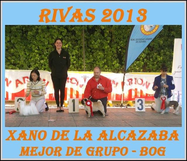 Concurso Nacional Canino Rivas Vaciamadrid. Podium Mejor de Grupo