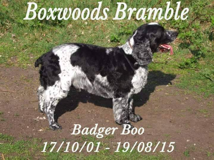 RIP sweet Badger Boo