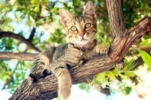 TREE CAT RESCUE