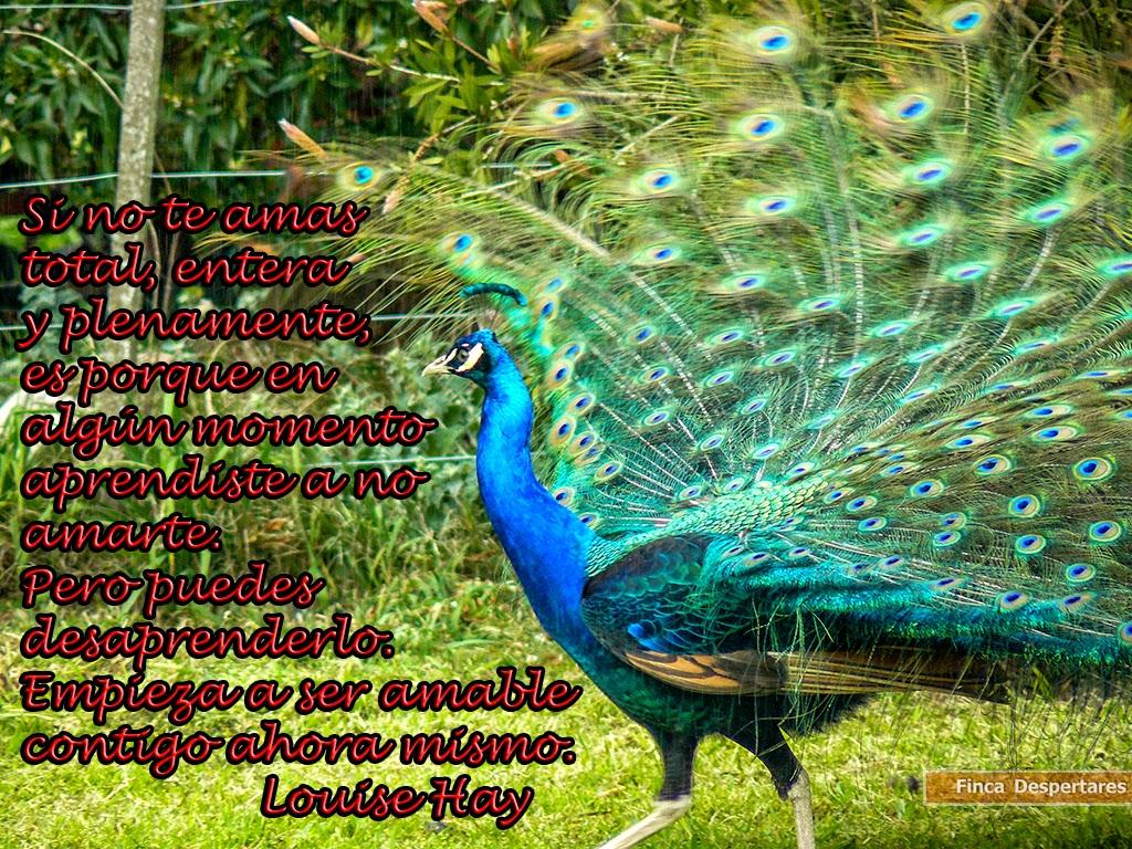 Finca Despertares - Louise Hay