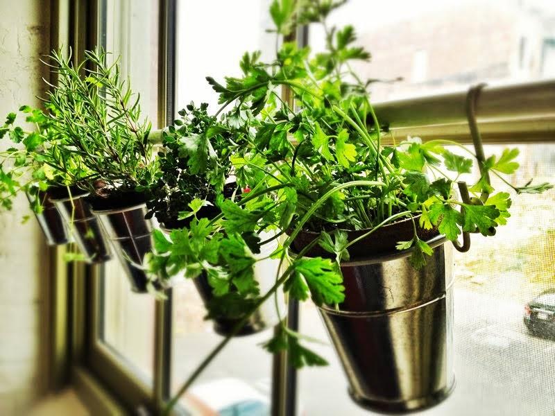 jardinage d'intérieur