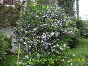 Flores del Paraguay