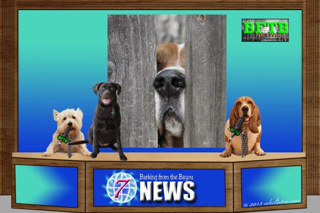 BFTB NETWoof News on Dog nose prints