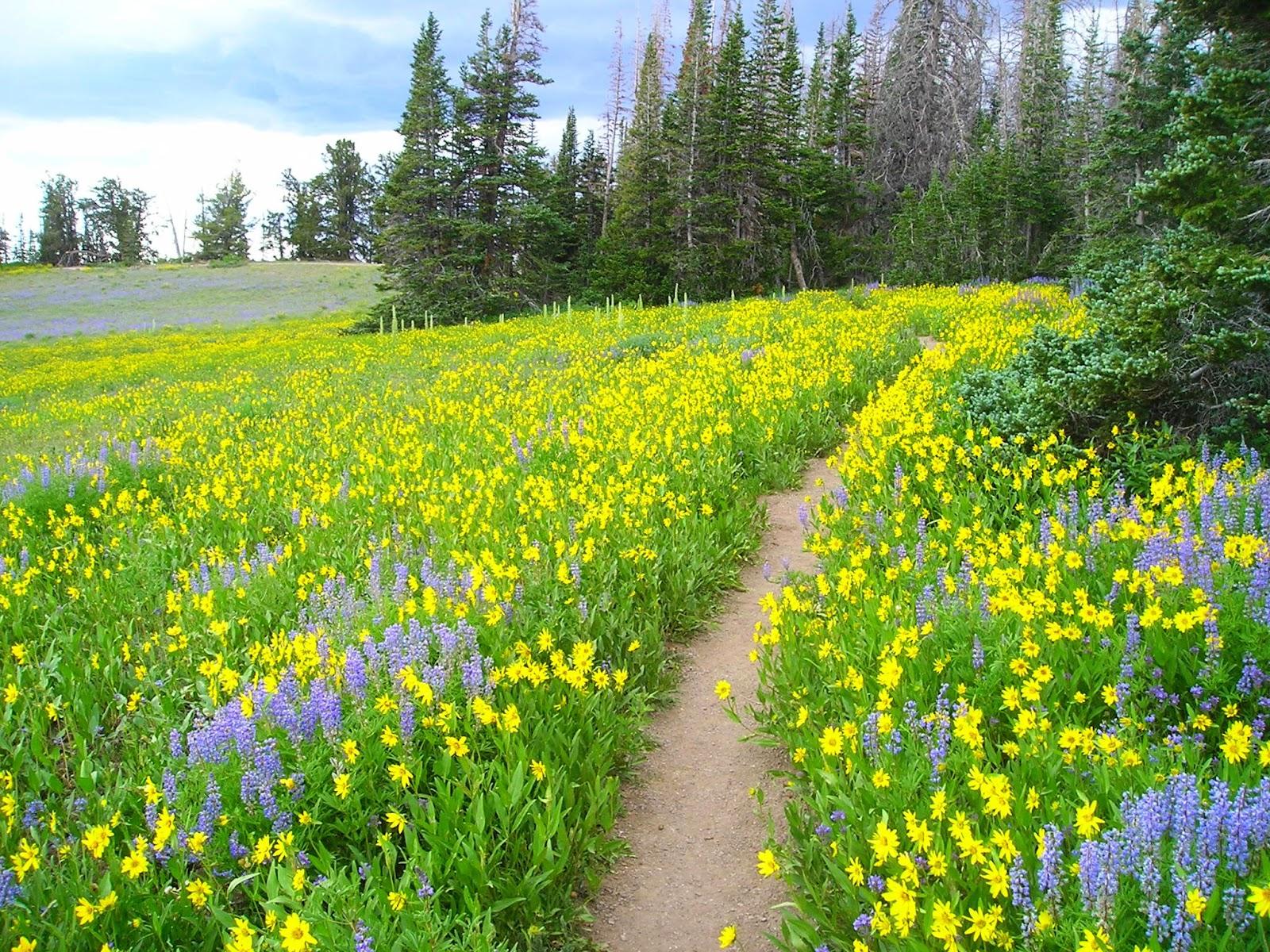 http://2.bp.blogspot.com/-fjXEqgzpK5c/T8ysrEuJMhI/AAAAAAAABlw/2tXBYxMpdKY/s1600/Alpine-Pond-upper-flowers.jpg