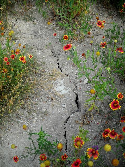 Lack of rain causing parts of White Rock Lake, Dallas TX to crack