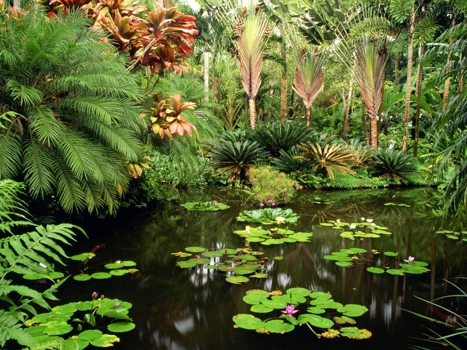 HOW TO GROW PLANTS The Garden Of Eaden