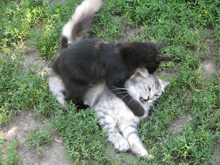 кошки