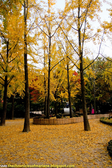 korea autumn