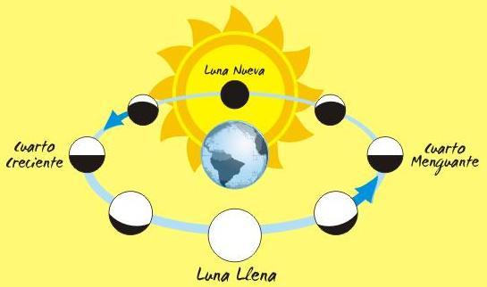 Las fases lunares para niños - Imagui