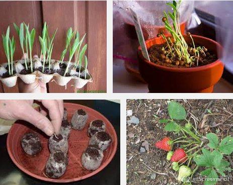 Plantar semillas dentro de casa
