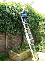 pruning a hedge with a fully-extended ladder