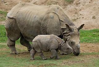 Animales Salvajes y sus Bebes