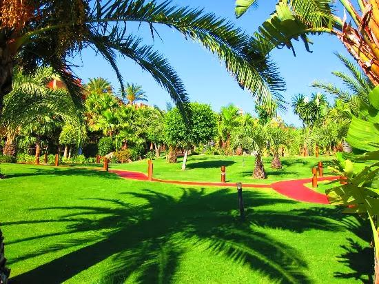 Fotos y consejos para tu jardin y grama for Jardines con palmeras