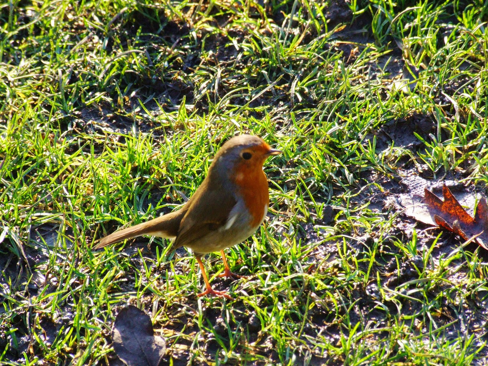 Królewski ptak w królewskim parku.