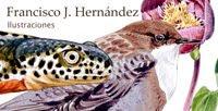 Blog Avestrazos Ilustración